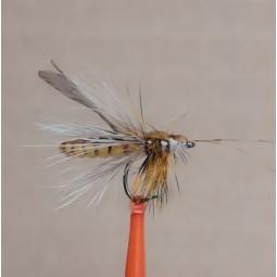 Fly Caddis adult
