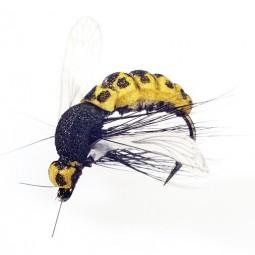 WASP-10
